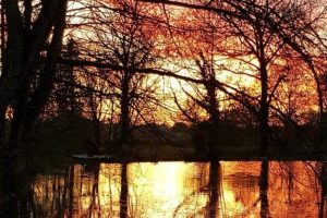 Firs Lake Sunset Exclusive Fishing Holidays France